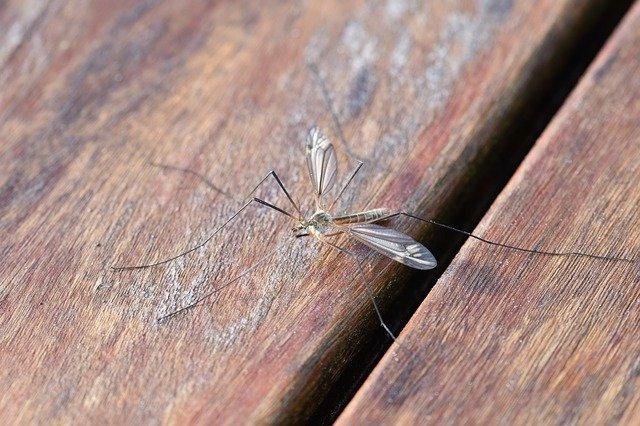 ANCI Sardegna - Campagna di Comunicazione sulle malattie trasmesse da zanzare